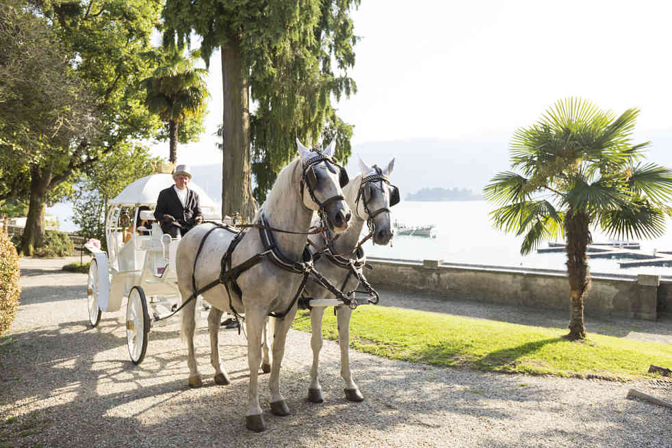 wedding carriage horses lake maggiore